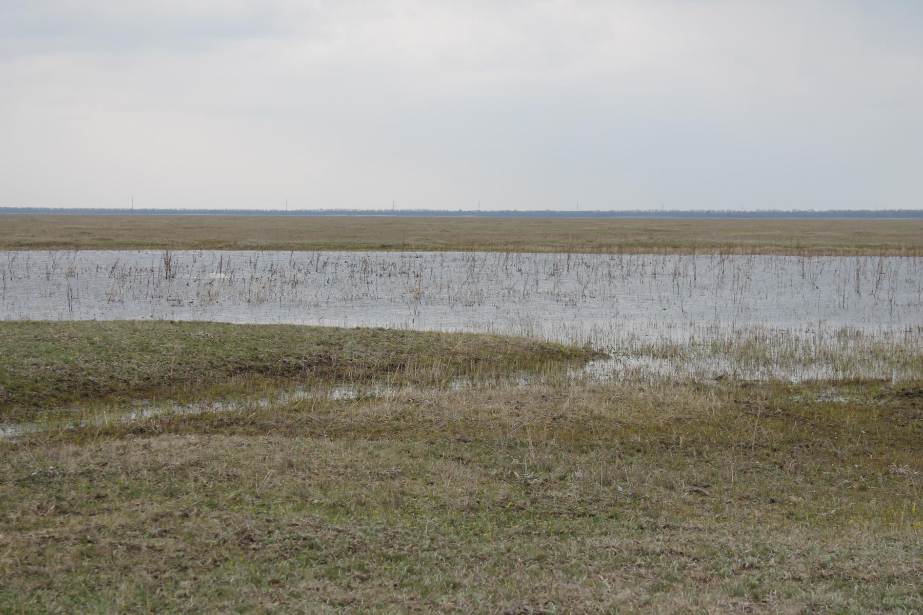 Егорлыкский лиман весной